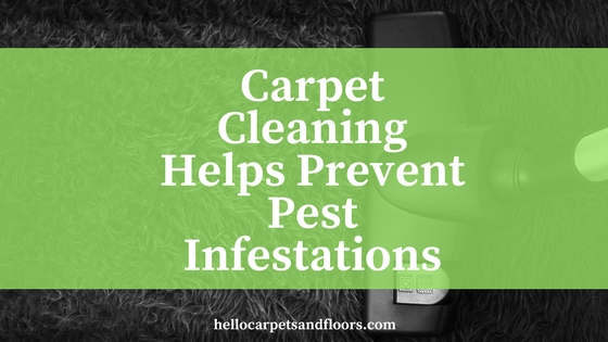 Carpet Cleaning Helps Prevent Pest Infestations